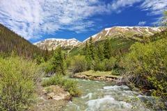 Gunnison河的一把冲的湖叉子北美灰熊谷的 库存图片