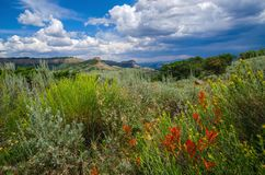 The Gunnison. Wildflowers and the Gunnison and a storm a brewing Royalty Free Stock Photos