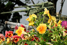 Guns and Roses, War Museum on Belgrade, Serbia. Flowers in front of army Stock Images