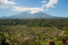 Gunung Batur ryż i wulkanu pola w Bali, Indonezja widzieć od szczytu tarasu Fotografia Stock