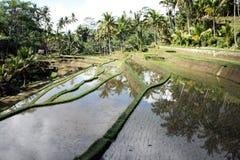 Gunung kawi. A nice rice field in gunung kawi (bali Stock Photo