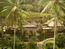 Gunung Kawi, schöner Tempel in der Natur, in den Palmen und im ricefield in Bali lizenzfreies stockbild