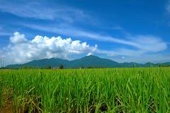 Gunung Raya, Langkawi arkivbild