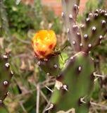 Guêpe sur le cactus avec la fleur orange Photo libre de droits