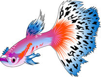 guppy illustration libre de droits