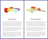 Guppy e peixes de Swordtail isolados nos ícones brancos ilustração royalty free