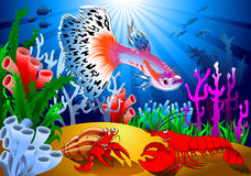Guppy fish on the coral reef. Aquarium fish. Beautiful guppy. Highly detailed  and illustration Royalty Free Stock Images