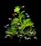 Guppy ryba ornament na czarny tle Obraz Royalty Free
