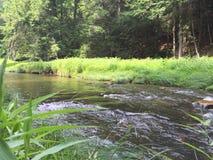 Gurgeln des Nebenflusses im Wald Lizenzfreie Stockfotografie
