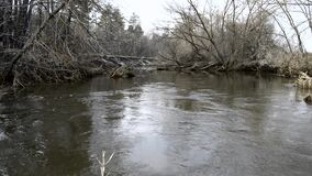 Gurgling or murmur sounds of water flow in shoal of small river in forest in early spring on background of fallen trees in water.