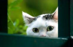 Gurious-flüchtiger Blick der Katze, Cat Eyes Lizenzfreie Stockbilder