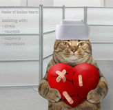 Guérisseur de chat des coeurs brisés Photographie stock