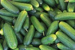 Gurkaskördbakgrund från gröna gurkor arkivbild