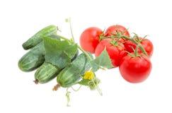 Gurken mit Stamm und Niederlassung der Tomaten Stockbilder