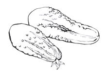 gurkor Hand dragen svartvit illustration Royaltyfri Fotografi