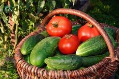 Gurkor och tomater i en korg Royaltyfri Bild