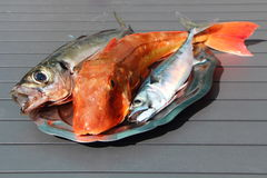 Gurnard, mackerel and horse mackerel on a pewter dish Stock Photo