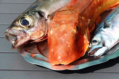 Gurnard, mackerel and horse mackerel on a pewter dish Stock Images