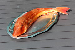 Gurnard on a pewter dish Royalty Free Stock Photography