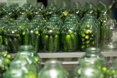 Gurtsov conservation. Fresh cucumbers in jars Stock Photography