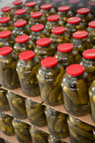 Gurtsov conservation. Fresh cucumbers in jars Stock Photo