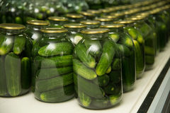 Gurtsov conservation. Fresh cucumbers in jars Stock Image