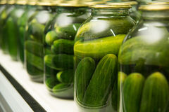 Gurtsov conservation. Fresh cucumbers in jars Royalty Free Stock Photography