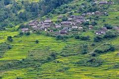 Gurung by mellan risfält i himalayasna, Nepal arkivbilder