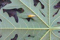gusano Imagen de archivo libre de regalías