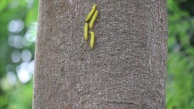 Gusano amarillo en árbol almacen de metraje de vídeo