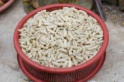 gusano de las avispas Fotos de archivo libres de regalías