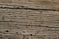 Gusano de madera de tronco de árbol Fotografía de archivo