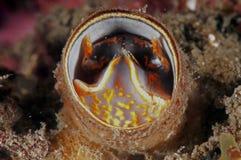 Gusano del tubo (gusano de mar) Foto de archivo libre de regalías