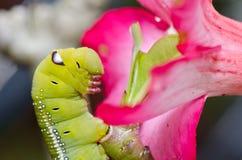 Gusano en naturaleza verde Fotografía de archivo libre de regalías