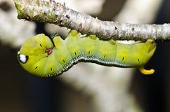 Gusano en naturaleza verde Fotos de archivo