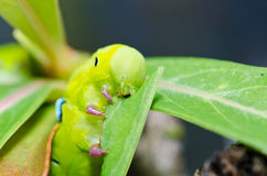 Gusano en naturaleza verde Fotos de archivo libres de regalías