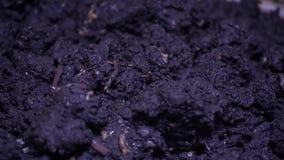 Gusano en suelo oscuro metrajes