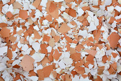 Gusci d'uovo schiacciati Fotografie Stock