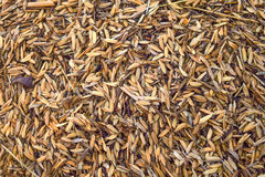 Gusci del riso immagine stock