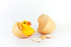 Guscio d'uovo ed anatra immagine stock