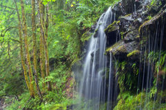 Gushing Pacific Rainforest Stream Stock Images