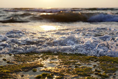 Wave Smashing on Seaweed Rock. Gushing surf of a wave smashing against an algae covered rock on the beach at sunset Royalty Free Stock Photo