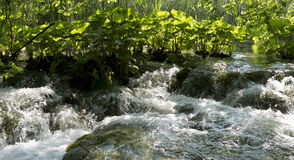 Gushing water in a creek. Gushing water in a stream going over rocks with large green leaves in the back stock photography