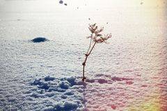 Free Gust Of Wind And Snow Falls From Tree On Dry Sow Stock Images - 148892734