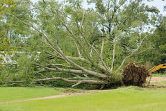 gustav huragan Obrazy Stock