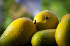 Gusto de los mangos de Gujarat Kesar Fotos de archivo
