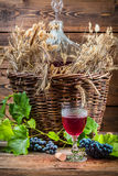 Gusto del vino rojo derecho de la damajuana Foto de archivo libre de regalías