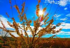 Gusto dell'autunno dorato e del sole sulle labbra fotografie stock libere da diritti