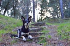 Gut ausgebildeter Hund Stockbild