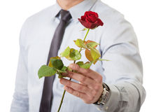 Gut aussehender Mann, der Rotrose hält Lizenzfreie Stockfotografie